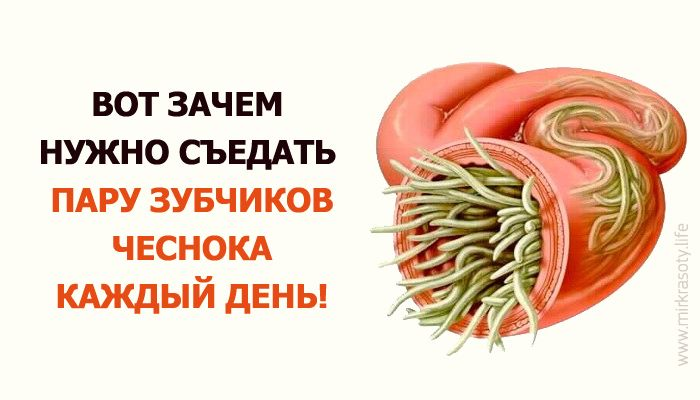 Главная особенность чеснока в его мощных антибактериальных свойствах. Он продолжает свое воздействие даже через сутки после приема пищи!