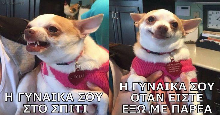 50 ελληνικές αστείες φωτογραφίες που κάνουν πάταγο!