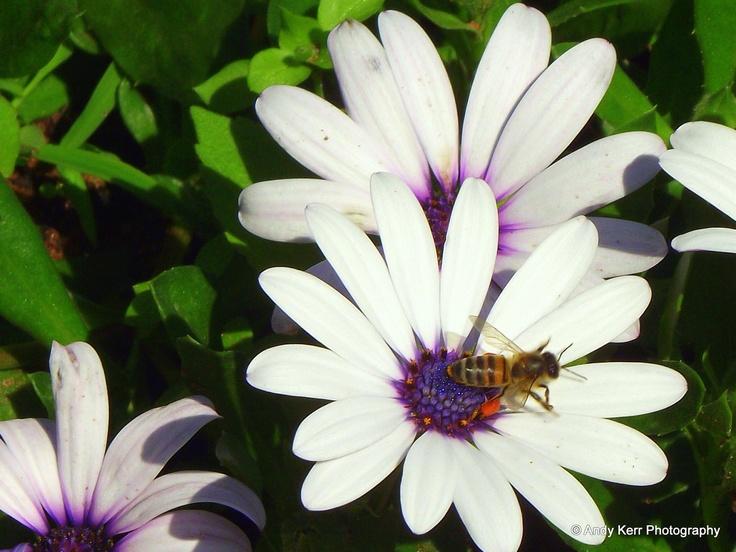 Daisy's with Bee