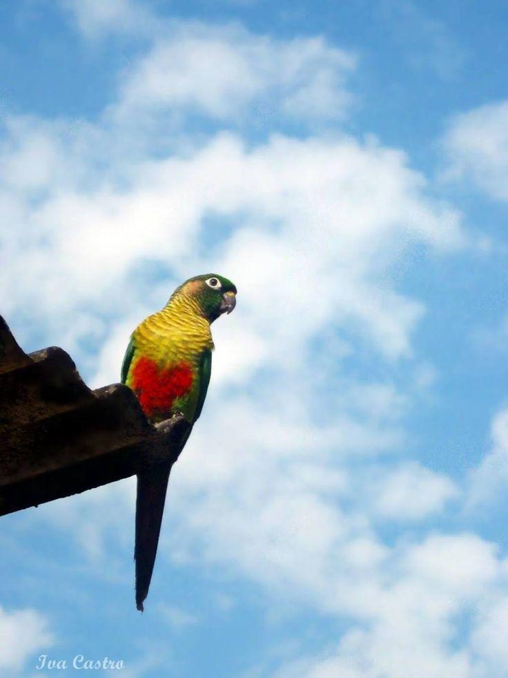 Roof Bird by Iva Castro