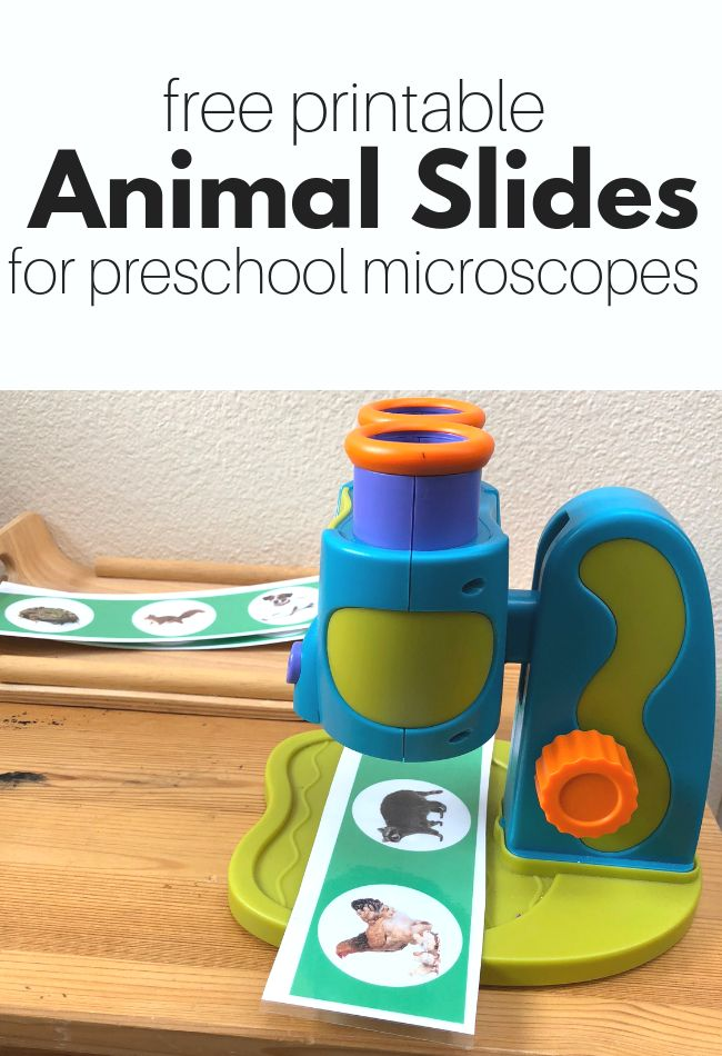 Free Animal Slides for Preschool Microscope