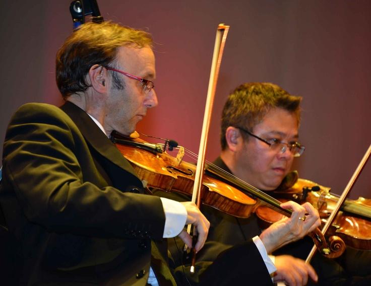 Principal Violinist