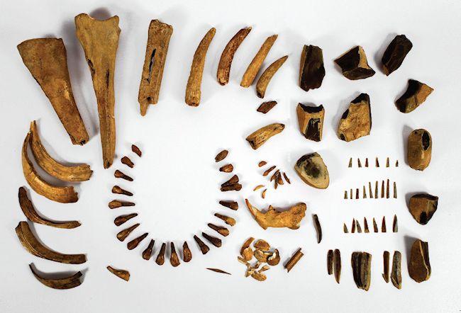 The #inventory from the Mesolithic #grave  #State #Archaeological #Museum #Warsaw #PMA #Archaeology #archeologia #muzeum #zabytki #wystawa #Janisławice #mezolit #Mesolithic #Prehistoric #Hunter