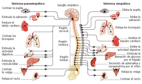 FISIOTERAPIA OSTEOPATIA NEUROLOGICA ICTUS