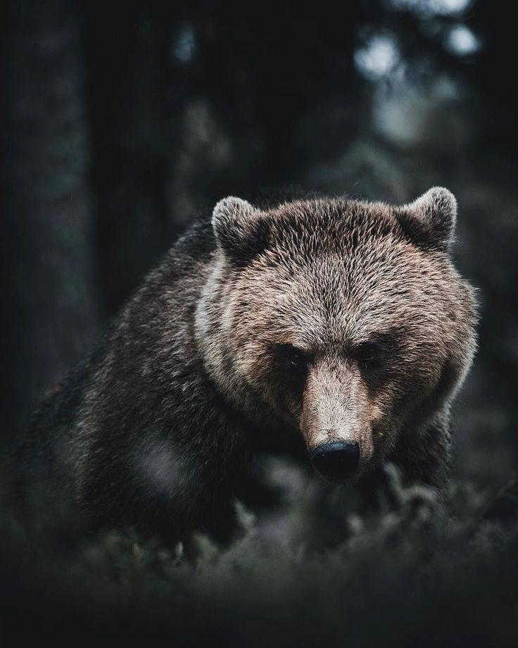 бурый злой медведь картинки того как статую