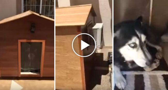 Cão Recusa-se a Sair De Dentro Da Casota Por Ter Ar Condicionado http://www.funco.biz/cao-recusa-sair-da-casota-ter-ar-condicionado/