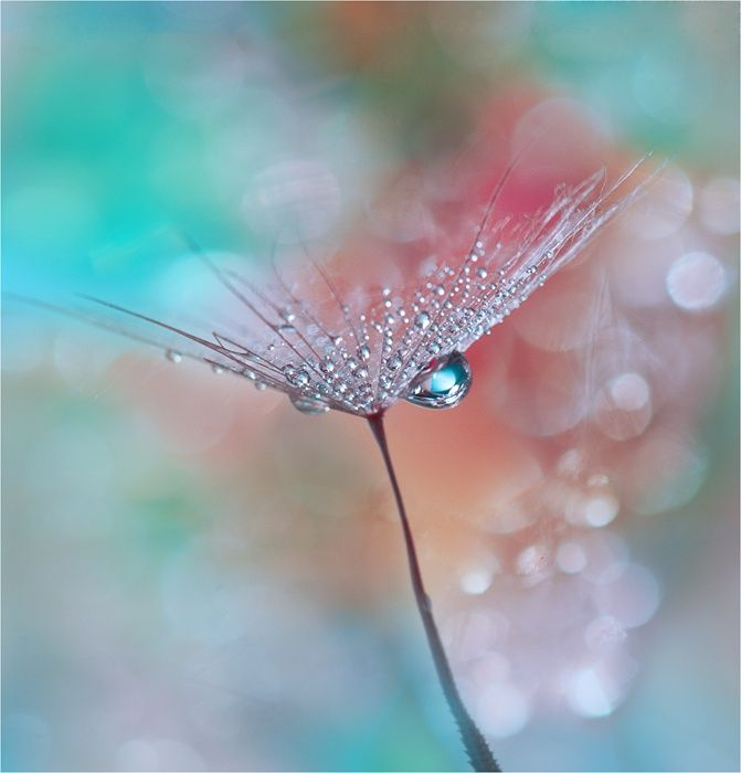 Best Photography Images On Pinterest Best Friends Creative - Amazing images captured tinniest water droplets