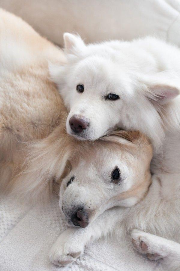 Szeretet a kutyák nyelvén