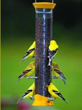Tube Bird Feeders filled with Nyjer seed will be sure to attract golden finches!  #goldfinches #birdwatching #tubefeeder
