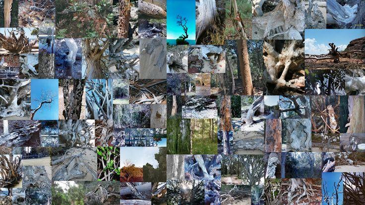 Coochemudlo Island Trees