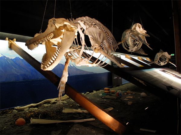 How many of you have been to the Húsavík Whale Museum in Iceland? #husavik…