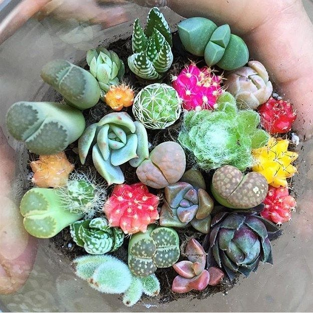 Babeez!!! Too much baby succulent cuteness from @fairyblooms I'm definitely doing this.  #succulents #love #cactus #plants #happy #cute #nature #colour by melanieshmelanie