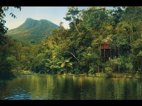 The Tailor - The finest collection of hand crafted Australian journeys. The World's Oldest Rainforest – Daintree Rainforest. Travel // Australia // Holiday // Vacation // Luxury