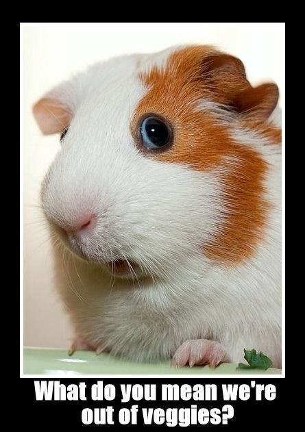 Oh, the horror! How'd we ever run out of veggies? I couldn't have eaten them all! Please go to the store, Mom!