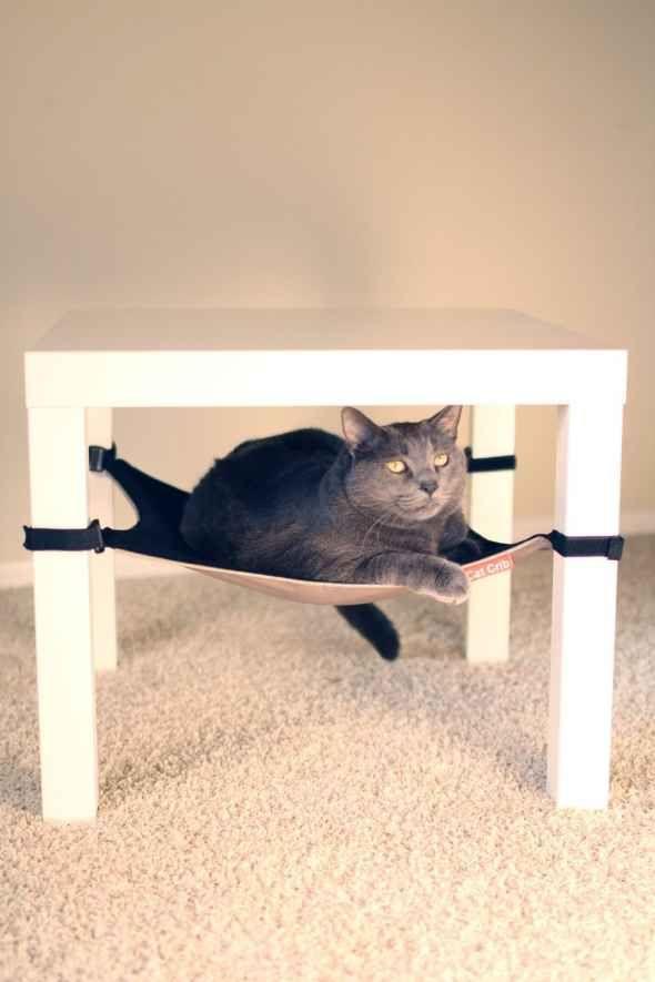 Best 25+ Cat hammock ideas on Pinterest | Diy cat hammock, Cat house diy  and Diy cat toys