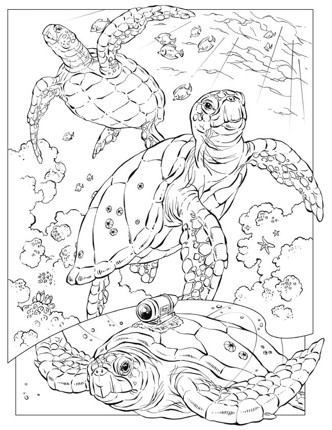 Turtle Coloring Page Coloring Pages Paper Art Pinterest