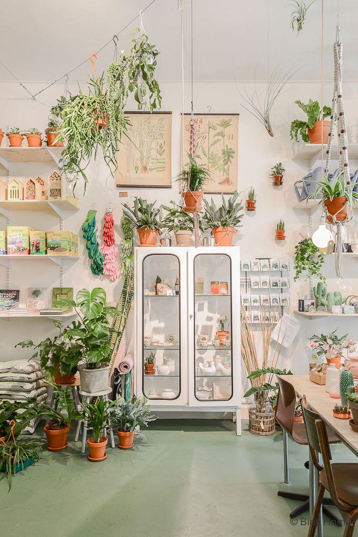 Wildernis, boutique de plantes urbaines - Lili in wonderland