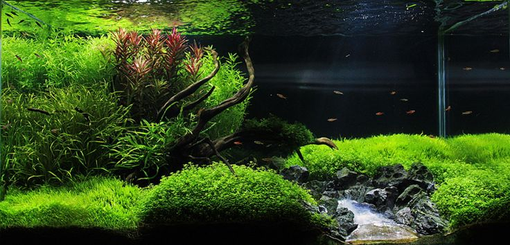 Fake river waterfall aquascaping aquatic plant central a world in a bottle pinterest - Gambar aquascape ...