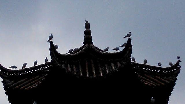 白小颱 Biały Mały Tajfun: mewy znad Szmaragdowozielonego Jeziora