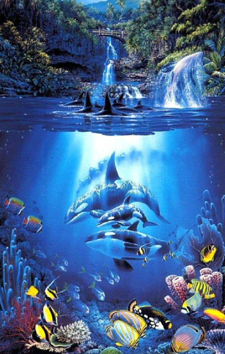 the sacred pool christian riese lassen fant a sea pinterest unterwasserbilder wal und. Black Bedroom Furniture Sets. Home Design Ideas