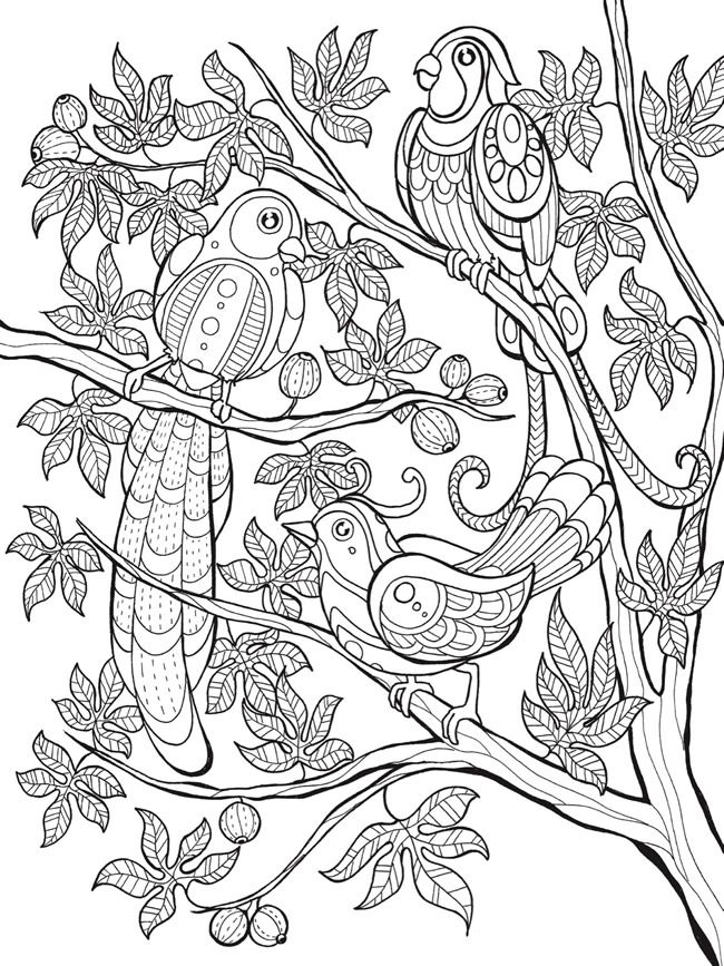 welcome to dover publications free coloring book sample page birds