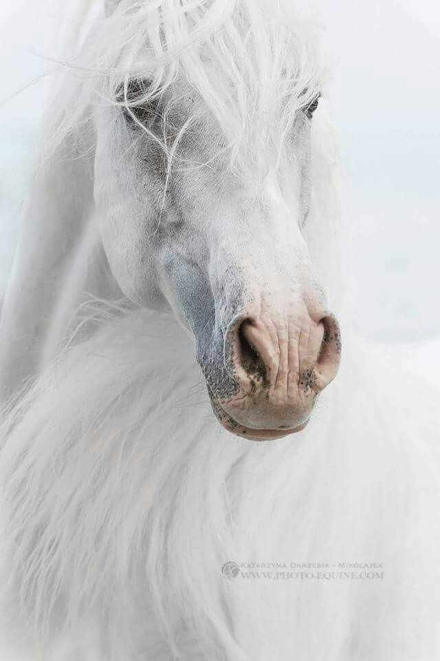 The 654 best PFERDE images on Pinterest | Wild horses, Animais and ...