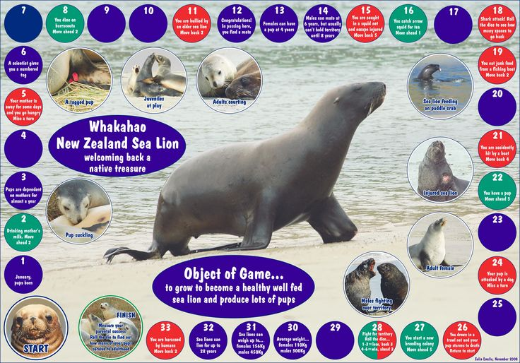 sea life worksheets | New Zealand Marine Studies Centre