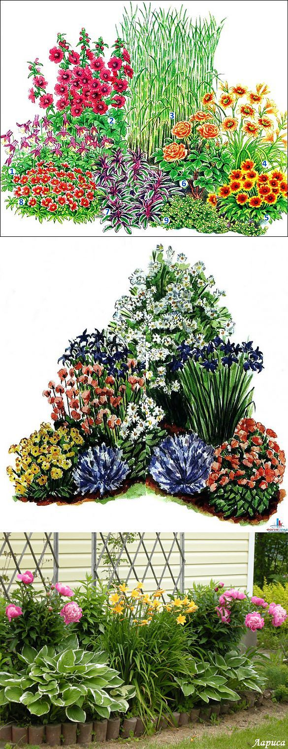 Красивые клумбы из многолетних цветов .. | Цветы | Постила