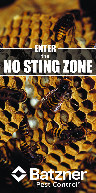 Best 25+ Yellow jacket bee ideas on Pinterest | Yellow jacket wasp ...