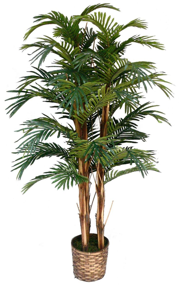 Preserved cypress bonsai 7 h contemporary phoenix by botanical - Laura Ashley 5 Foot Tall High End Realistic Silk Palm Tree With Wicker Basket Planter