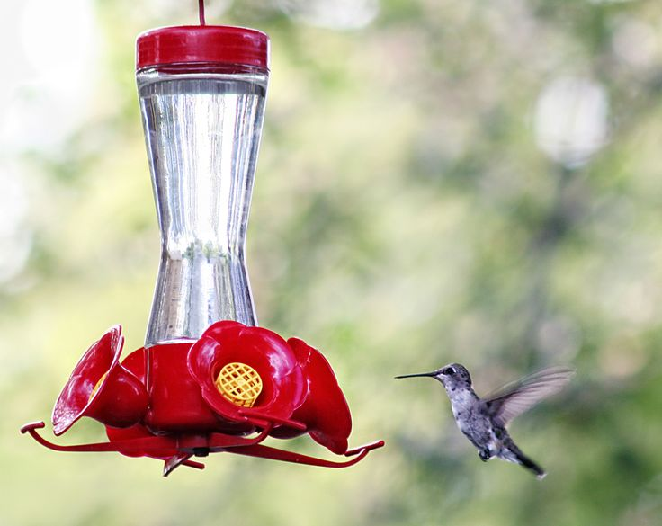 How to Make Your Own Homemade Hummingbird Nectar