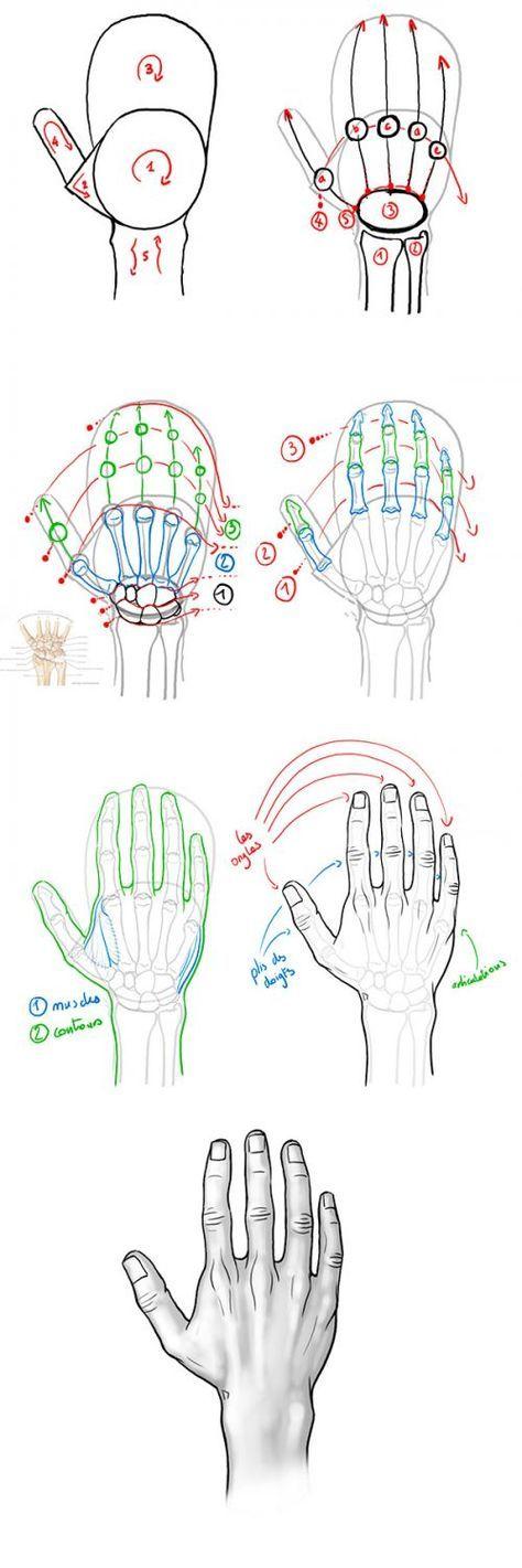 Tutoriel : dessiner la main en vue dorsale. anatomie de la main. Drawing tip : drawing hand. Hand anatomy