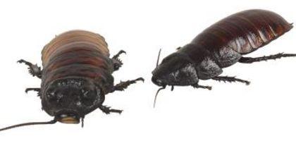 Repel Fleas Naturally Humans