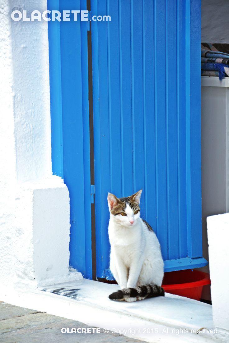 Cat - Ierapetra