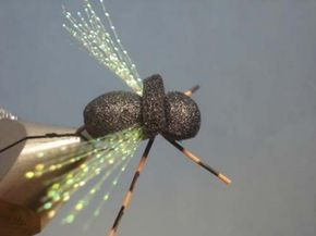 Periodical Cicada- by Loren Williams | | Hatches Fly Tying Magazine