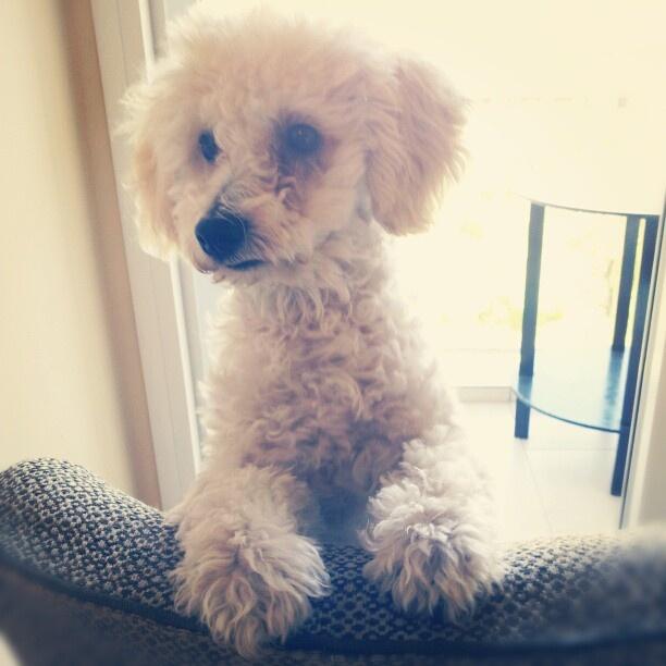 Elliot #pet we love you