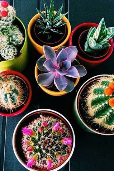 5 plants that can survive the dorm life | college | dorm | plants | decor