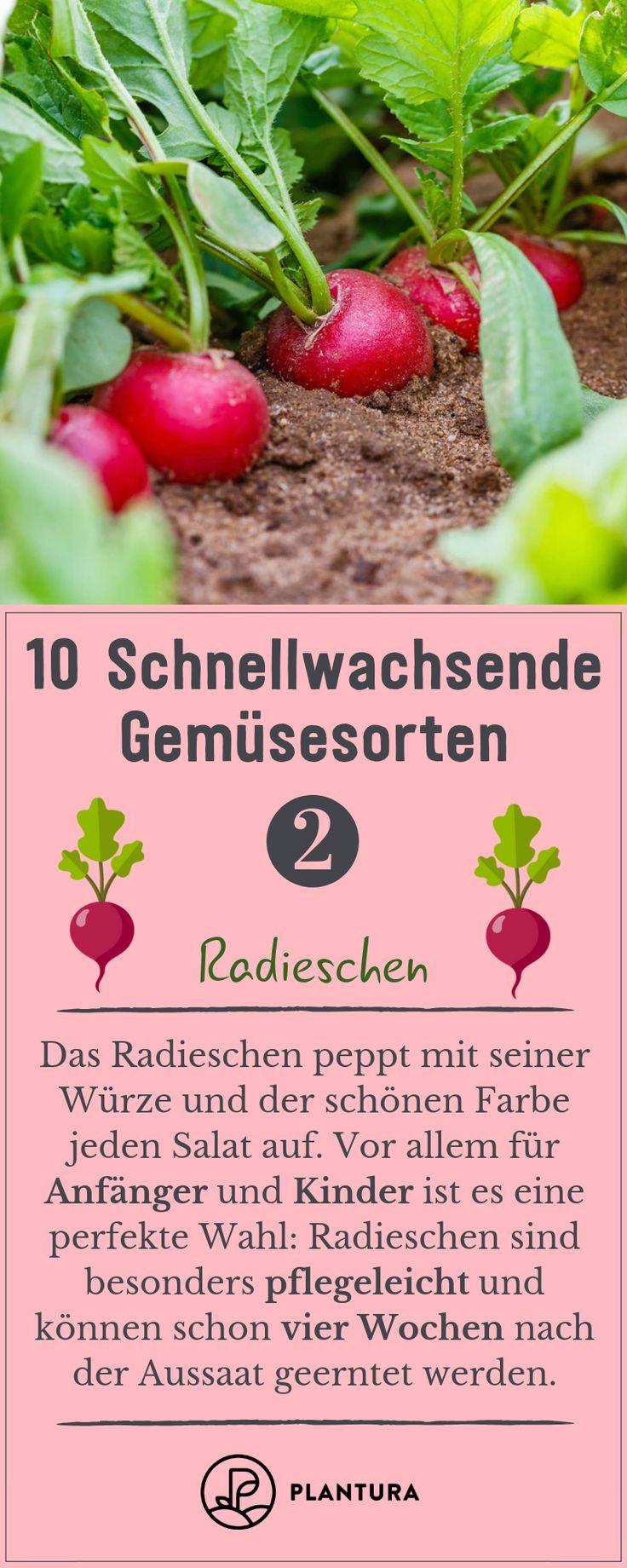 10 schnellwachsende Gemüsesorten – Plantura | Garten Ideen & Tipps | Gemüse, Obst, Kräuter