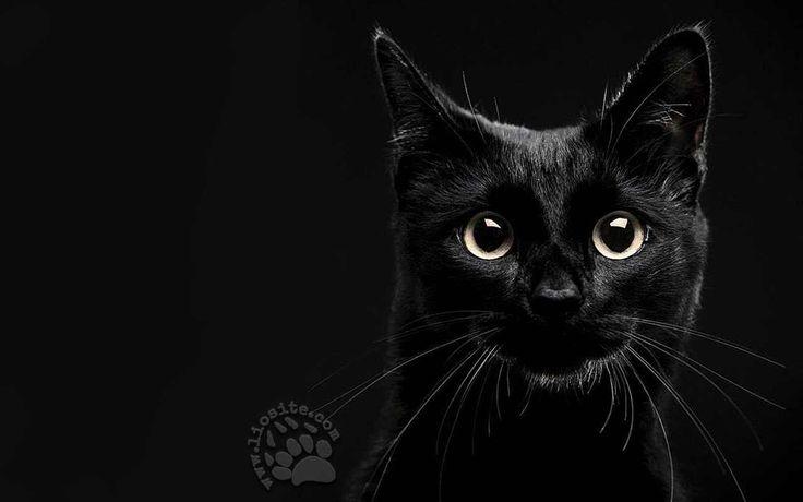 """Un'altra poesia... arguta direi, scanzonata come quasi sempre è Ennio Flaiano.  """"Lo Scienziato cerca un gatto, un gatto nascosto in una stanza buia. Non lo trova ma.. ma ne deduce che è nero.[...]""""  #ennioflaiano, #gatto,"""