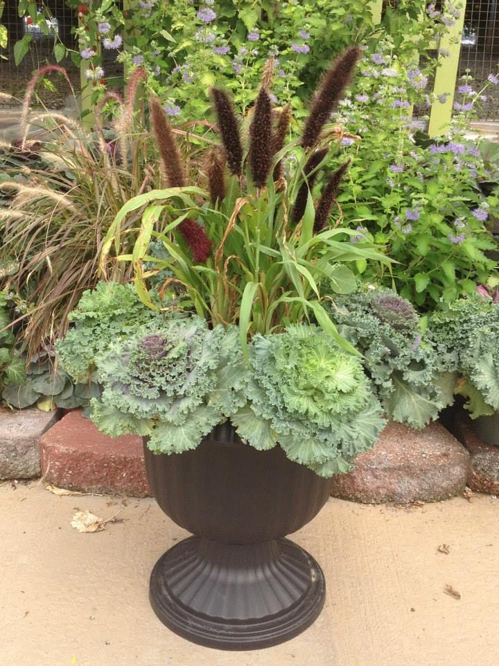 98 Best Ornamental Cabbage Planter Images On Pinterest 400 x 300