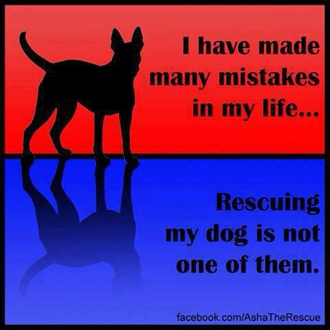 Rescue dogs are the best:) Like dogs? Be sure to visit and LIKE our Facebook…