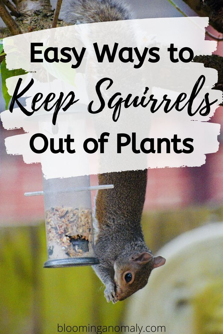 Easy ways to keep squirrels out of plants in 2020 plants