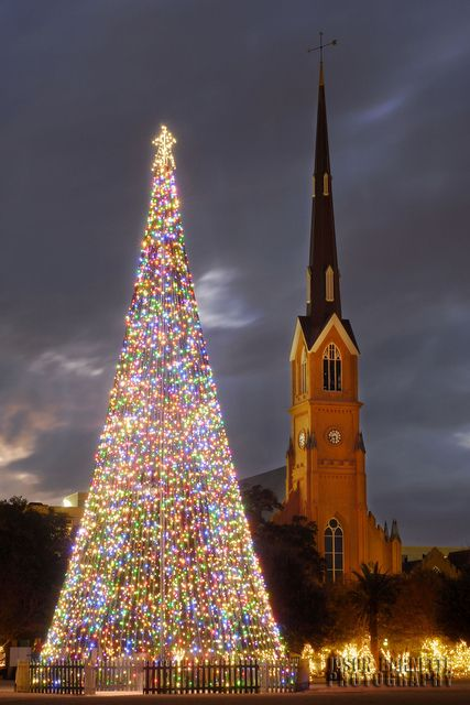 A towering Christmas tree stands in the center of Marion Square, with the steeple of St. Matthews Church in the distance, in downtown Charleston, South Carolina