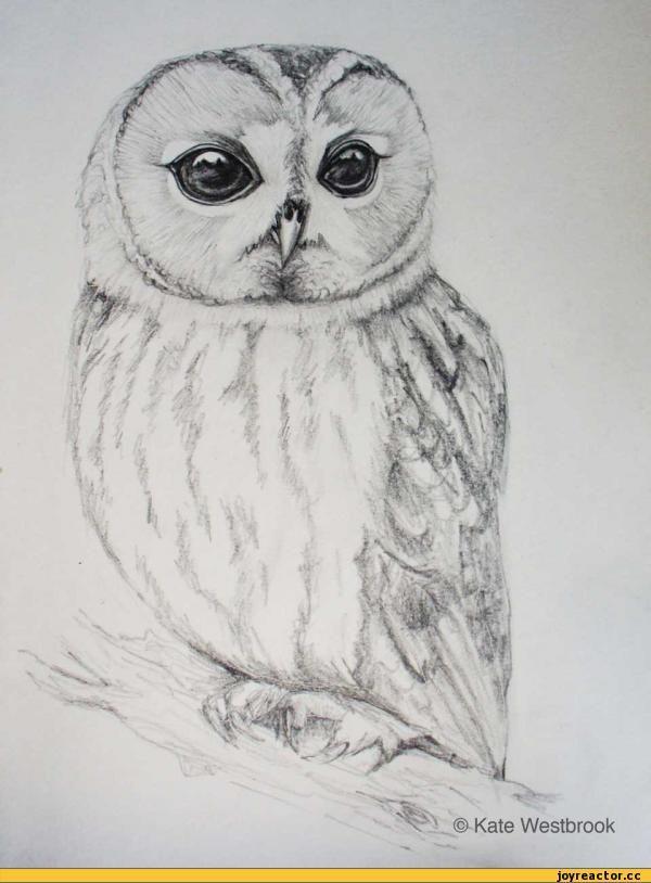 Картинки для карандашом совы