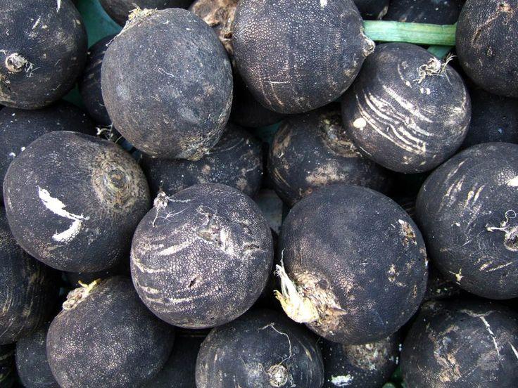 Fekete retek az igazi egészségbomba – BioBody Blog
