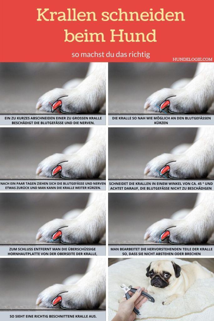 Krallen Schneiden Beim Hund So Machst Du Das Richtig 8 Hunde Hunde Sachen Hund Krallen Schneiden