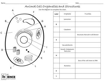 plant and animal cells worksheets for middle and high school students bryson plant animal. Black Bedroom Furniture Sets. Home Design Ideas