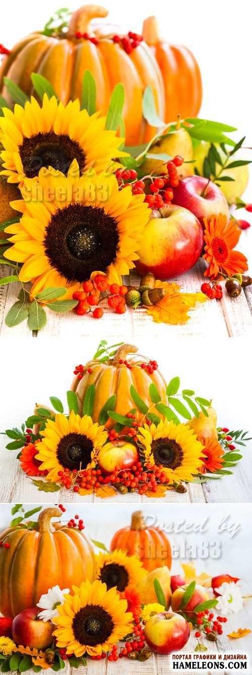 Тыква, подсолнухи, желуди и яблоки - осенние композиции - клипарт |  Pumkin autumn compositions