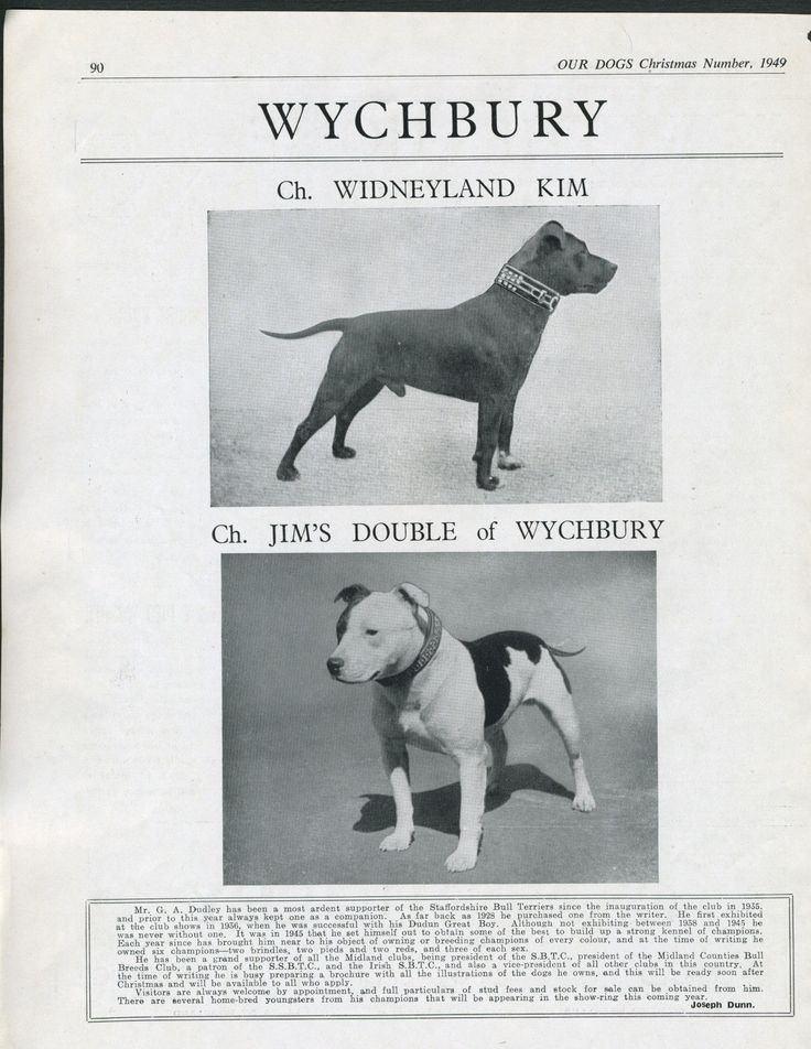 apbt: The beauty and strength that is the American Pit ...  |American Pit Bull Terrier Vintage