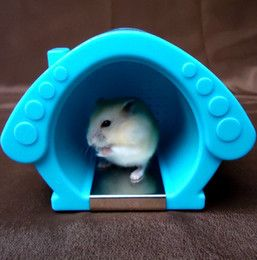 online shopping Cool Bird Cage room Hamster houses complete with ice packs small pet Hamster plastic litter in the box Hamster cage toys